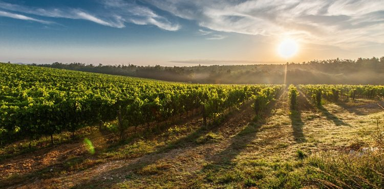 wijnstreek beleefvakantie toscane