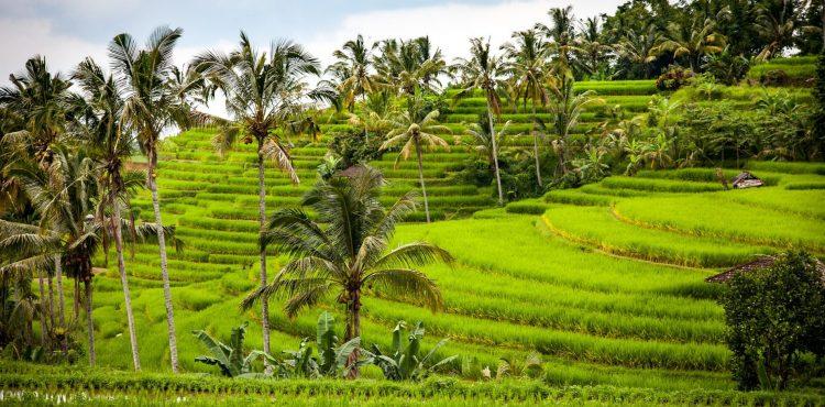 honeymoon tussen de rijstvelden Bali