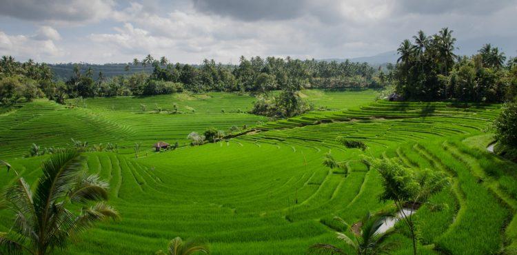 beleefvakantie rijstvelden bali