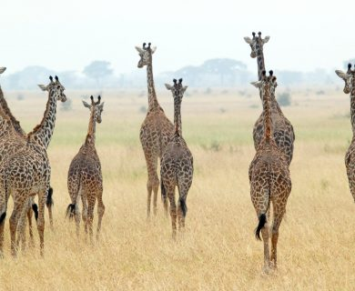 beleefvakantie tanzania