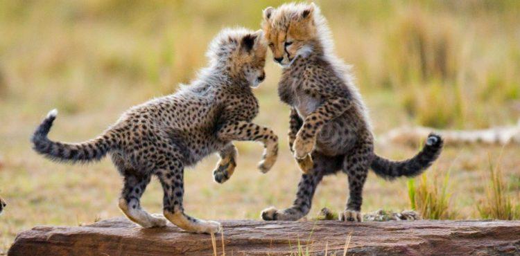 beleefvakantie in tanzanie serengetie