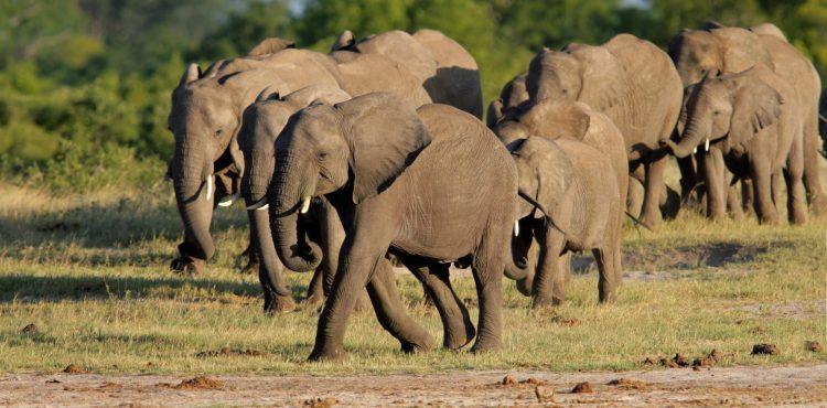 beleefvakantie zimbabwe