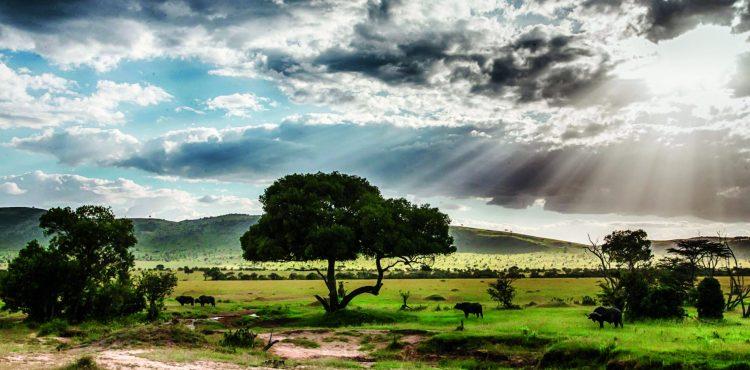 Tanzania safari beleefvakantie